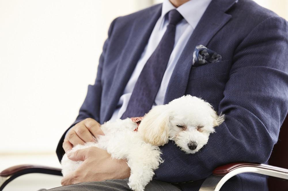 インタビュー中、Y部長の腕のなかで眠るラム。その信頼関係がうかがえる