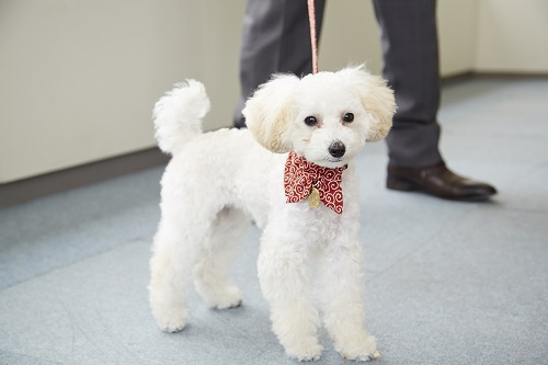モーレツY部長の愛犬・ラムちゃん