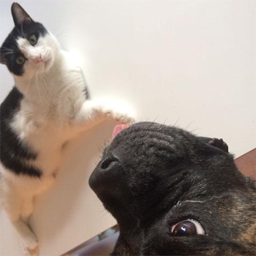 先住猫ジジとダダ