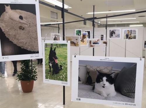sippo特別写真展「みんなイヌ、みんなネコ」=東松山市