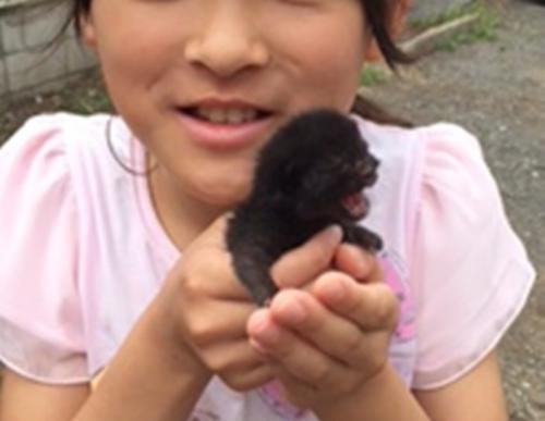 昨年7月、家の近所で子猫を保護した瞬間(お母さんが撮影)
