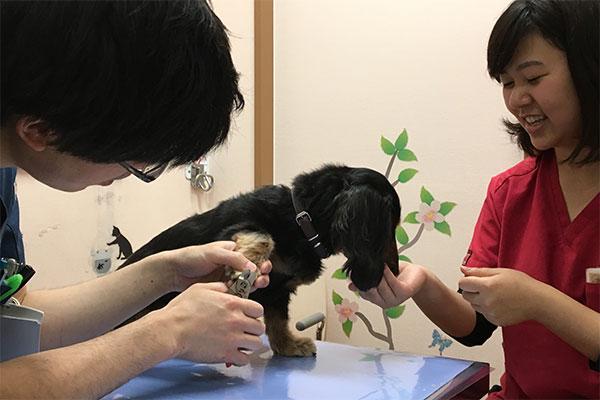 おやつを食べながら爪切りする高須賀ネーレくん