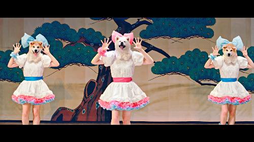 頭が秋田犬のアイドルが歌って踊る動画「Waiting4U」=秋田犬ツーリズム提供