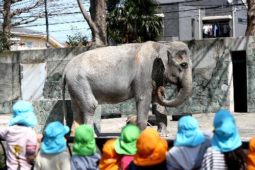 69歳で死んだアジアゾウのはな子=2013年3月、東京都武蔵野市の井の頭自然文化園