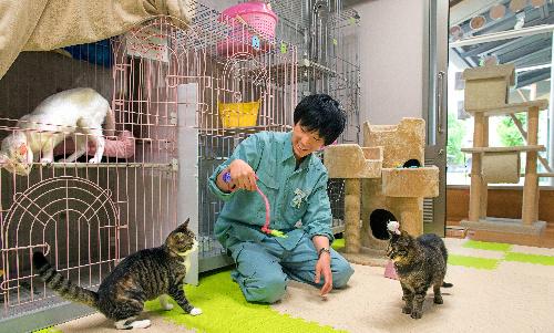京都動物愛護センターで保護された猫たち。外から見ることができるゾーンもある=京都市南区