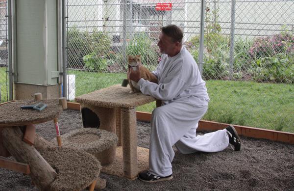 ラーチ・コレクションズ・センターにある猫の運動エリアで。