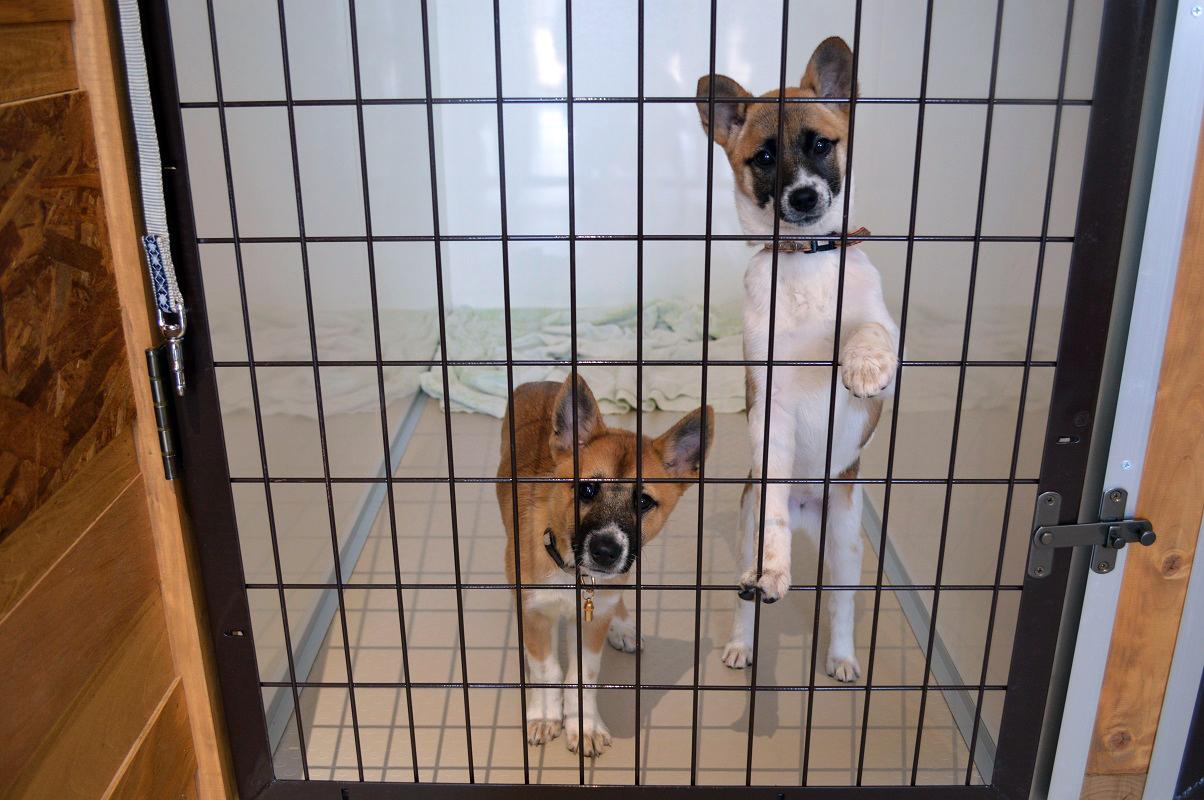 出会いを待つ保護犬たち