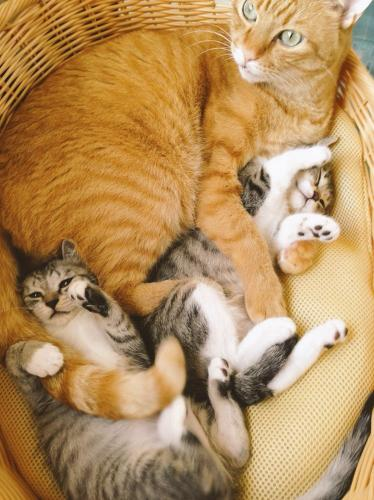 「もしかして妹?」姉妹猫を抱くムッサン 「ココニャさんちの障子破り猫軍団」より
