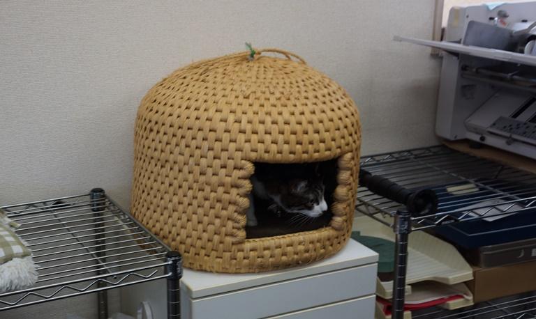 3階のオフィスにある猫ちぐら 今日は誰が入っているかな?