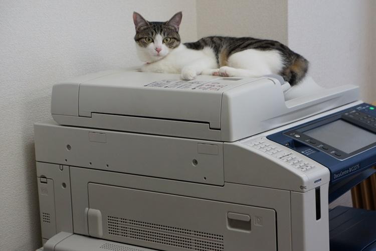 コピー機の上に座って、皆の仕事ぶりを見る輪