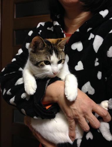 克也さんの妻が命名した、三毛猫みぃ子