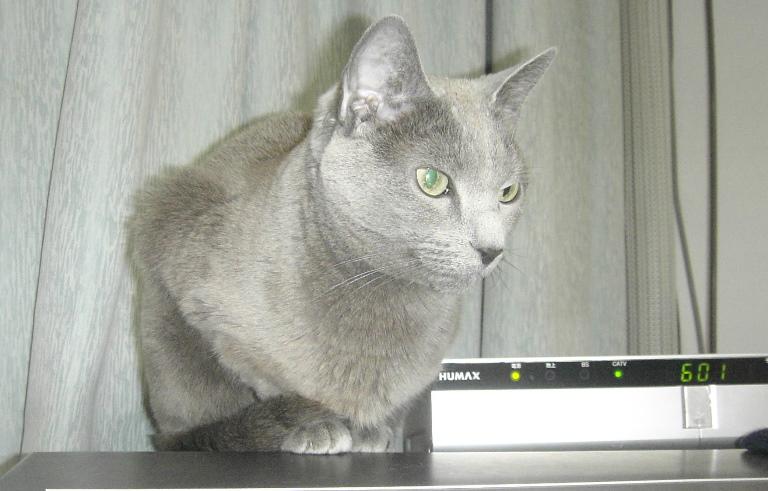 テレビ(ブラウン管)の上にのるのが好きだったロッシ―