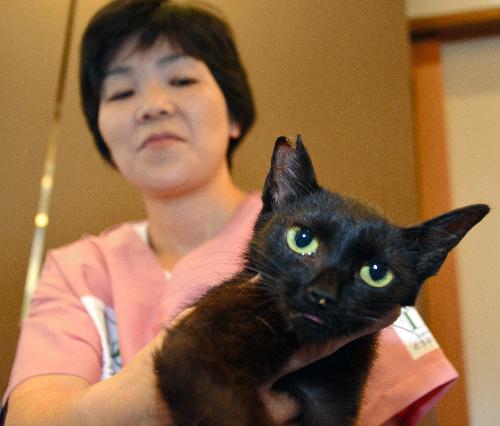 不妊手術の目印に片耳を花びら形にカットした猫=三重県津市森町
