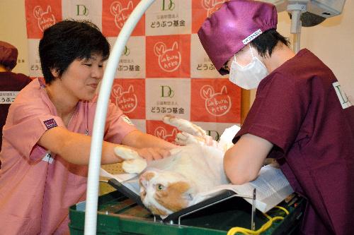 獣医師(右)が飼い主のいない猫に不妊手術をした=三重県津市森町