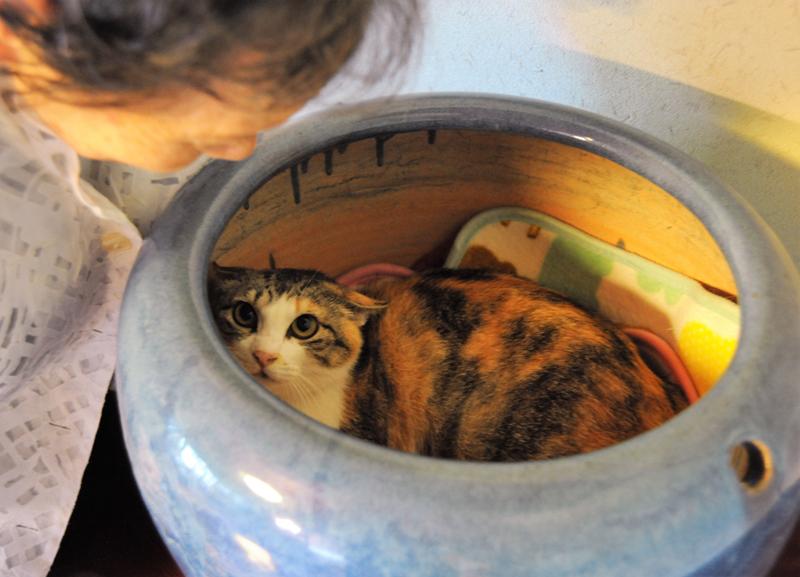 「おはぎ」は火鉢の中に入ってなかなか出てこなかった