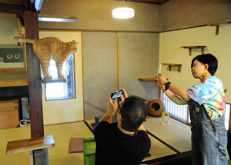 店内では自由に猫と触れ合い、写真撮影ができる