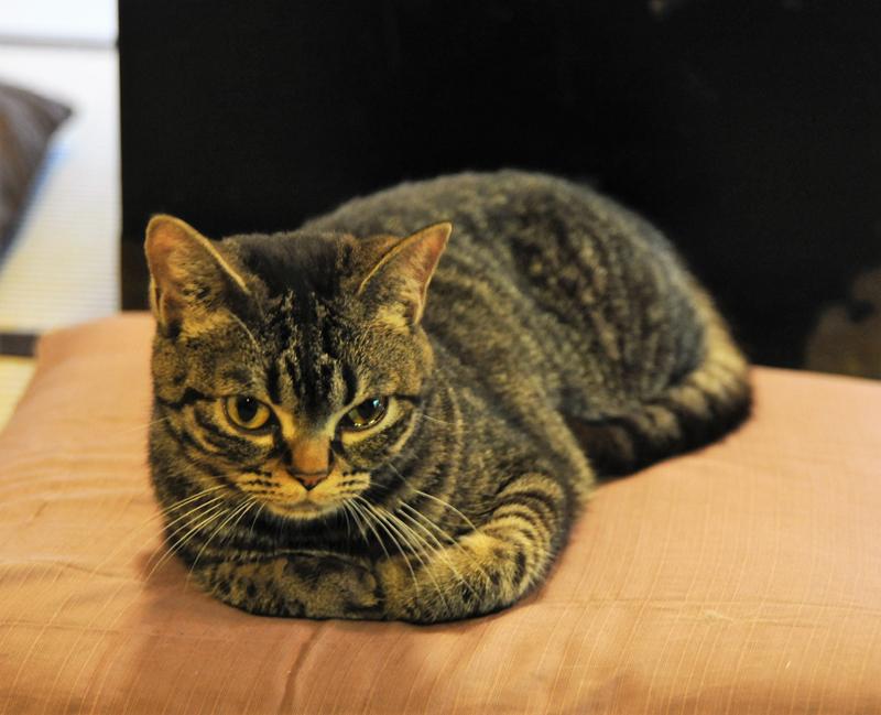 店長の愛猫「ちびこ」がアルバイトとしてお手伝い