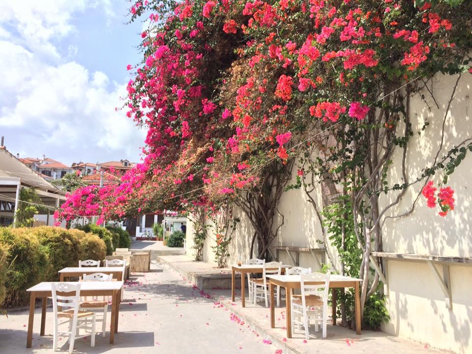 ブーゲンビリアの下での時間を楽しめるバーレストラン(スコペロス島)