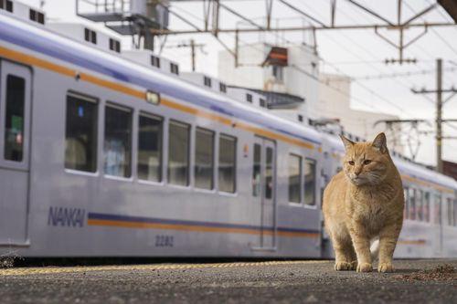 (c)Yasuyuki Saka