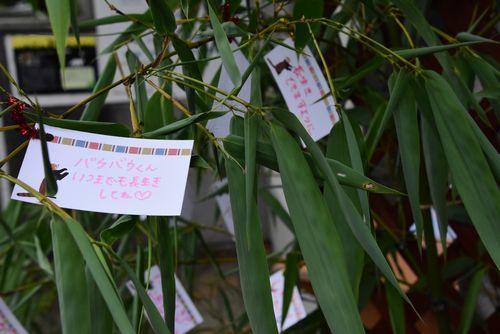 子どもたちから寄せられたお祝いのメッセージカード=美祢市の秋吉台サファリランド