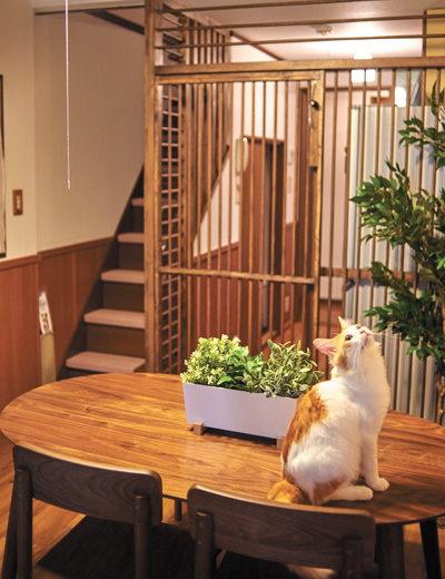 東京キャットガーディアンの猫付きシェアハウス「562大阪京橋」のめかぶ君。共用キッチンは完璧に侵入防止にしてある