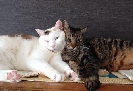 一緒に引っ越してきた仲よしの雌猫ナナ(左)とゴー