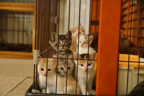 子猫たちもいっぱい