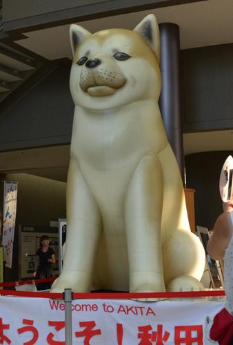 高さ3メートルの「秋田犬バルーン」=秋田市の県庁第2庁舎