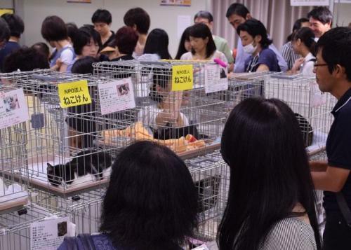 譲渡希望者が詰めかけた保護猫譲渡会=京王百貨店