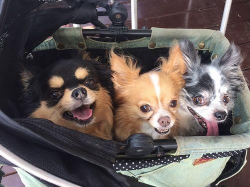 バギーの中にいるレオ、マリン、アクア