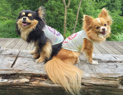 ポーズを決める兄妹犬、レオとマリン