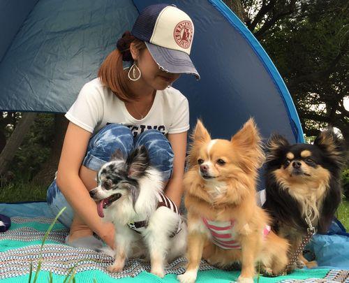 休日、愛犬3匹とキャンプ中