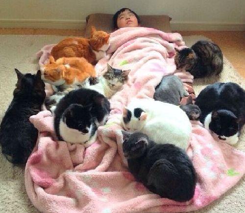 具合が悪くて寝ている二男の夕來君を心配そうに囲む猫たち(神保枝美さん撮影)
