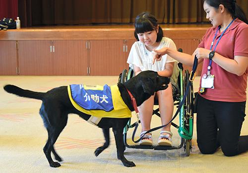子どもたちは車いすで落とした物を介助犬に拾ってもらう体験もした=千葉県横芝光町文化会館