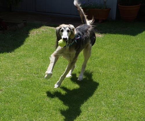 家の庭で遊ぶアディ。見守っていないとフェンスを越えてしまう。
