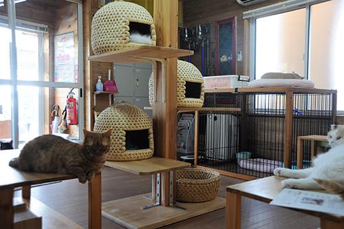 新潟で人気の民芸品「猫ちぐら」が置かれた猫カフェ「ちぐら」=新潟市内