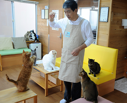 鈴木さんの周りには猫が集まってくる