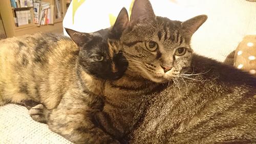 子猫の頃から、ずっと仲良しのあんず(左)とモモ