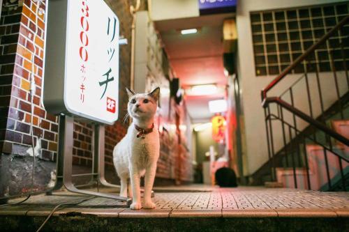 『渋谷ルデコ ねこ写真展』から ©Yasuyuki Saka