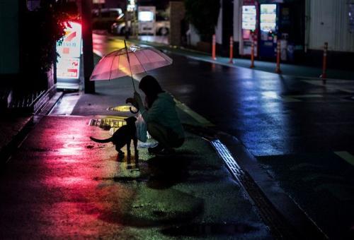 『渋谷ルデコ ねこ写真展』から ©Masakazu Ikeguchi