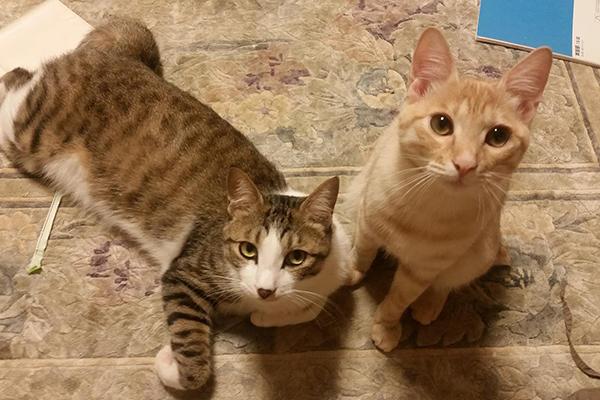 現在のジャッキー(左)。右は弟猫「きなこ」