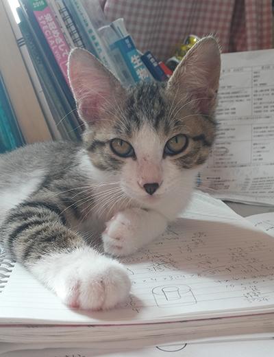 救出して間もないジャッキー。長女のノートの上にどっかり。