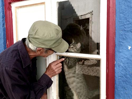 私たちを見ていた猫と田中泯さん