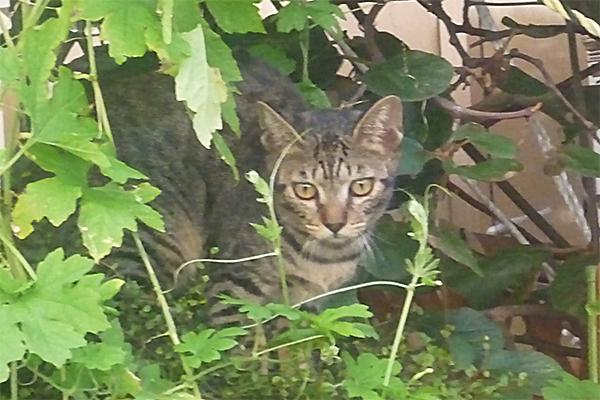 見つからないようにじっとする野良猫