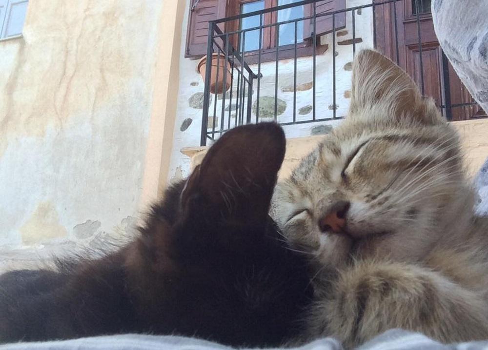 気を許し過ぎな2匹。猫好き冥利に尽きます