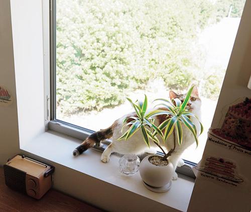 外がよく見える窓で猫もご機嫌