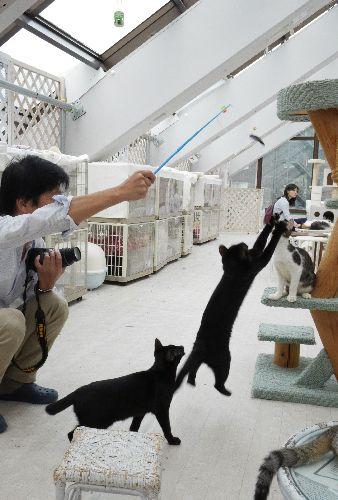 猫カフェでは自由に猫と遊べる=東京キャットガーディアン