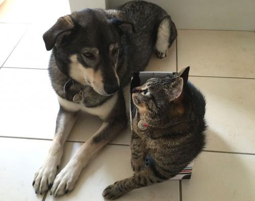 マメ(左)とナッチャン