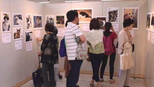 8月に京王百貨店新宿店で開かれた「みんなイヌ、みんなネコ」
