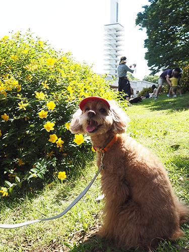 「ワンコの聖地」、駒沢オリンピック公園にやってきたワン!
